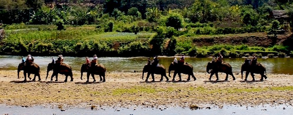 Balade sur dos de l'éléphant - Laos