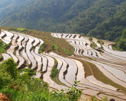 les rizières de Ba Be