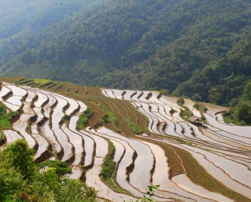 Les rizières de Cao Bang au Vietnam