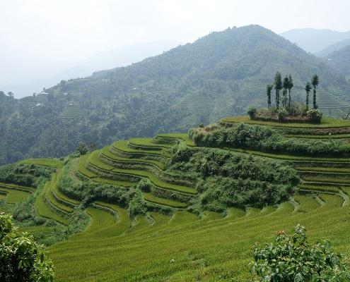 Les rizières de Ha Giang
