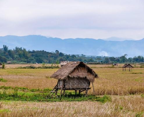 Campagne de Luang Namtha