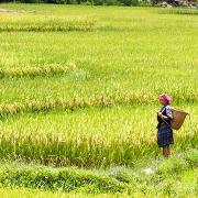 Les rizières de Mu Cang Chai
