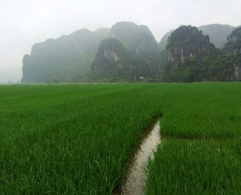Rizières à Ninh Binh