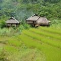 Rizière à Pu Luong
