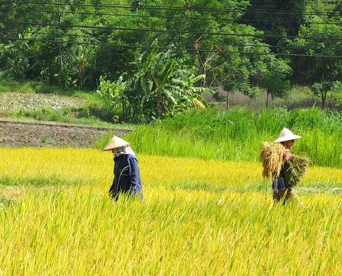 Campagne de Nghia Lo au Vietnam