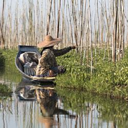 Jardins flottant du lac Inle en Birmanie