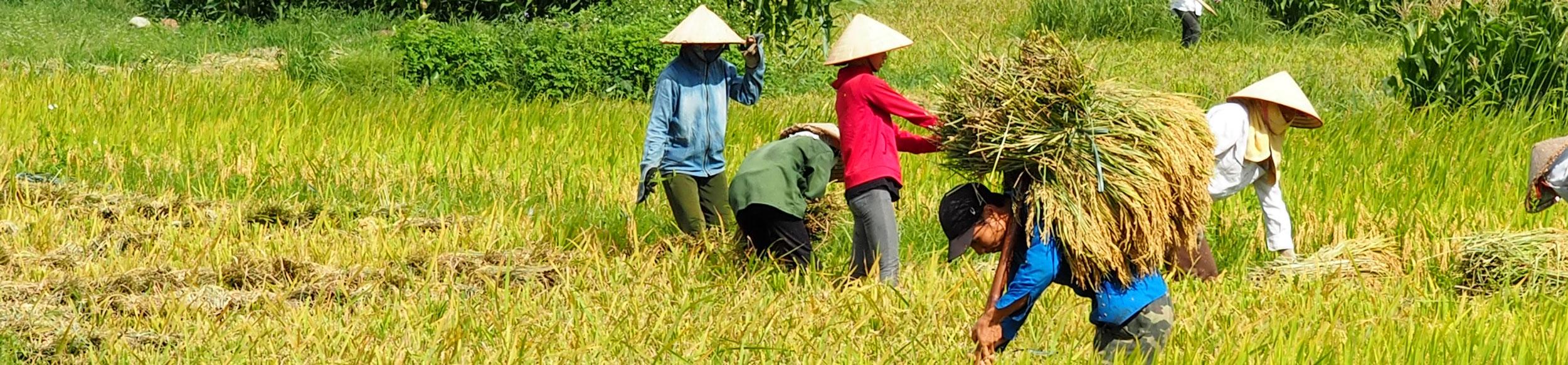 Rencontre avec les Thai Blanc de Nghia Lo