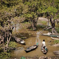 Forêt inondée du lac Tonlé Sap