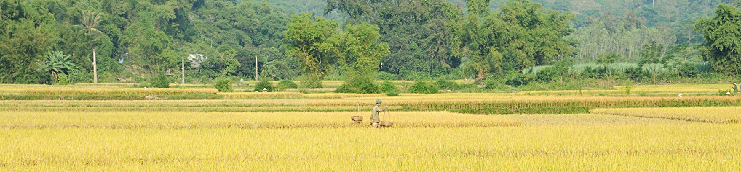 Montagnes et rizières à la vallée de Mai Chau