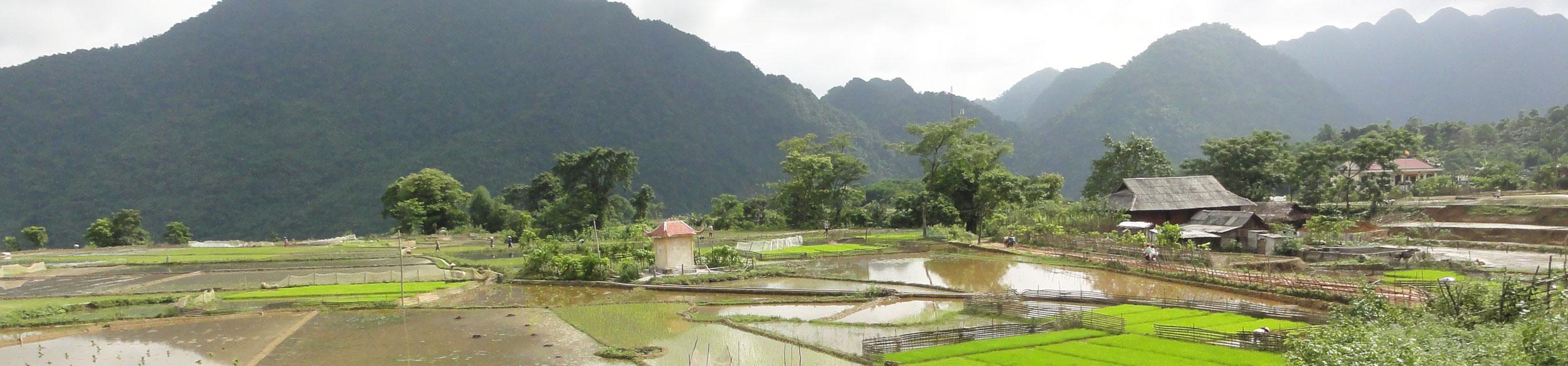 La réserve naturelle de Ngoc Son Ngo Luong