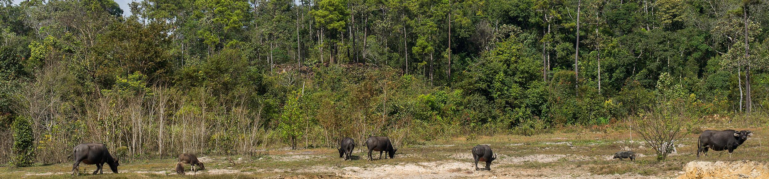 L'aventure dans la parc de Phou Khao Khouay avec Carnets d'Asie