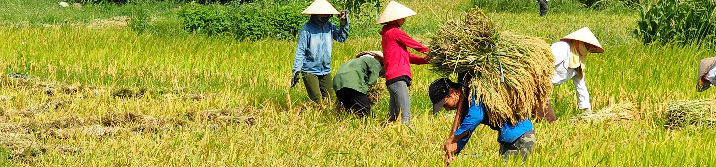 Découvrir Nghia Lo avec Carnets d'Asie