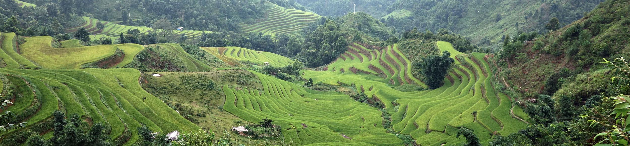 Rizières en terrasse près de Ban Lien dans le nord Vietnam