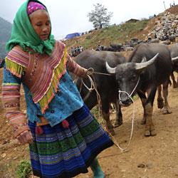 femme hmong sur le marché aux buffles de Can Cau