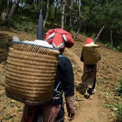 Ethnie Dao Rouge sur un sentier de forêt