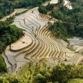 Rizières en terrasse à Hoang Su Phi au nord Vietnam