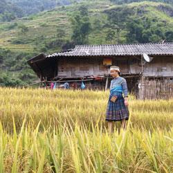 Ethnie dans la région de Hoang Su Phi