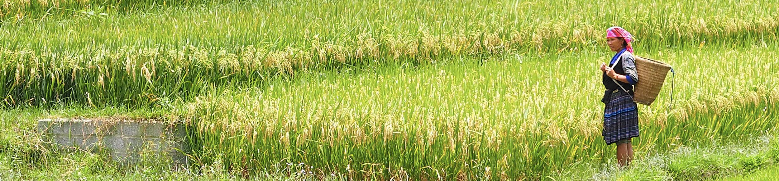 femme Hmong dans les rizières de Mu Cang Chai