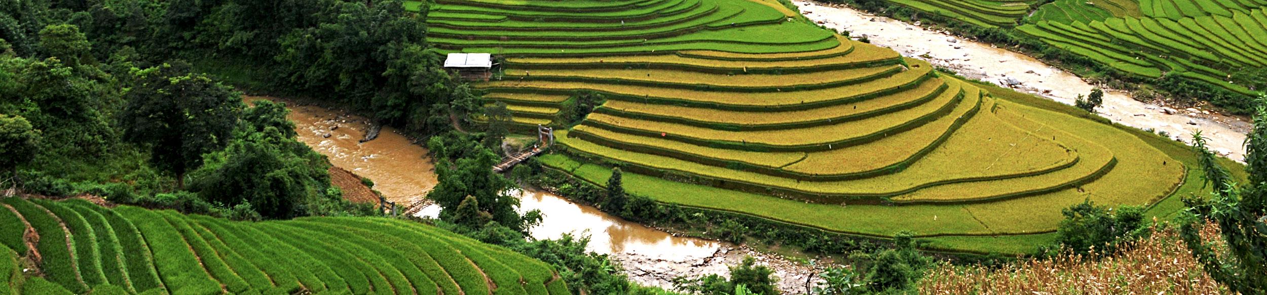 Découvrir la rizière à Mu Cang Chai avec Carnets d'Asie