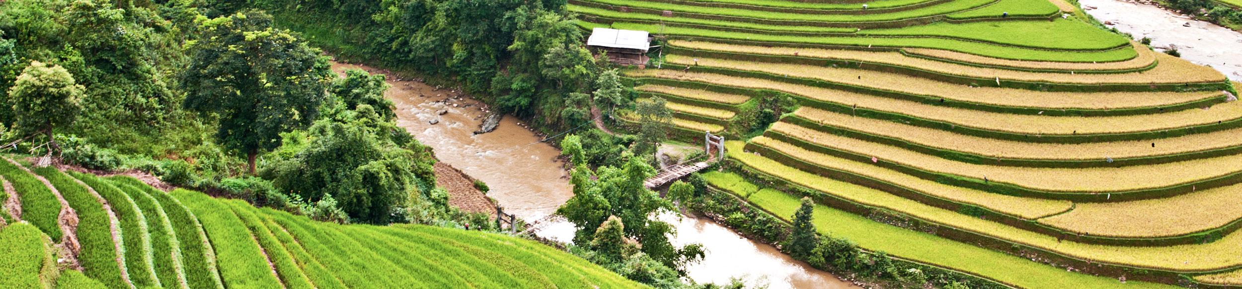 Rizières en terrasse dans la région de Mu Cang Chai au nord Vietnam
