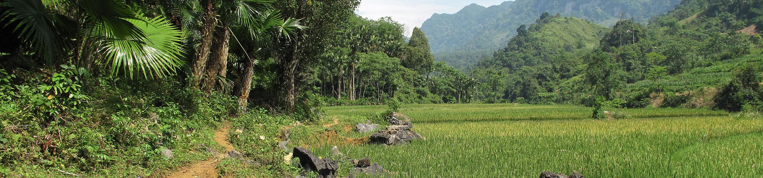 paysage de forêt et rizières dans la réserve de Ngoc Son Ngo Luong