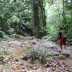 Trek en forêt entre Pu Luong et Ngoc Son Ngo Luong au Vietnam