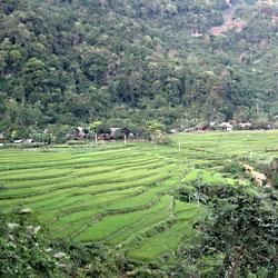 Village de Ban Hieu et ses rizières en terrasse dans la réserve de Pu Luong