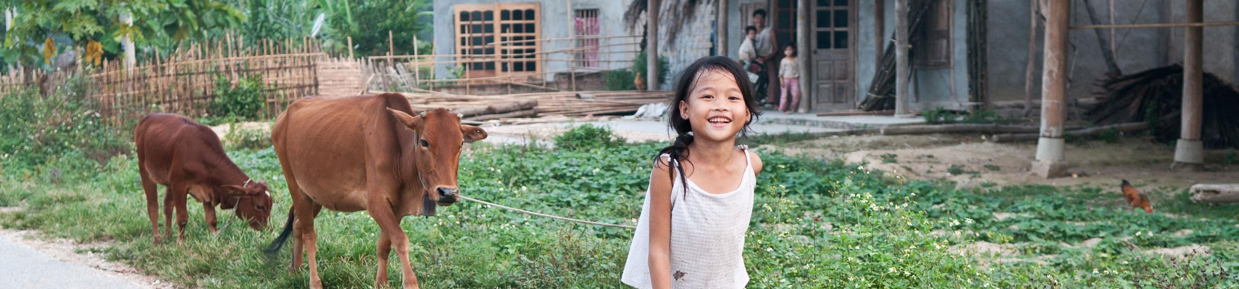 Jeune fille promenant ses vaches près de Vu Linh au lac Thac Ba