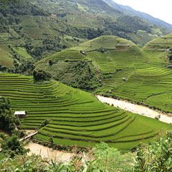 rizières en terrasse de la route nationale 32 à Mu Can Chai