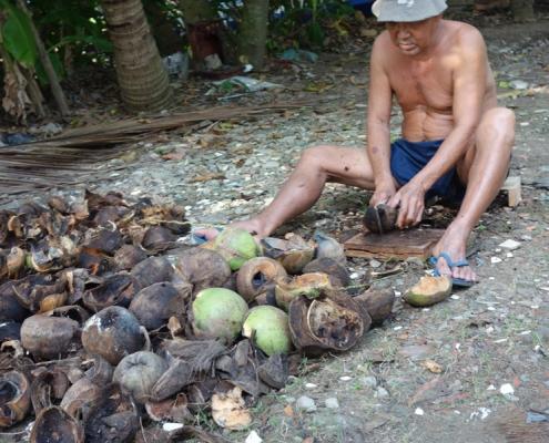 Écossage de noix de coco dans le delta du Mékong