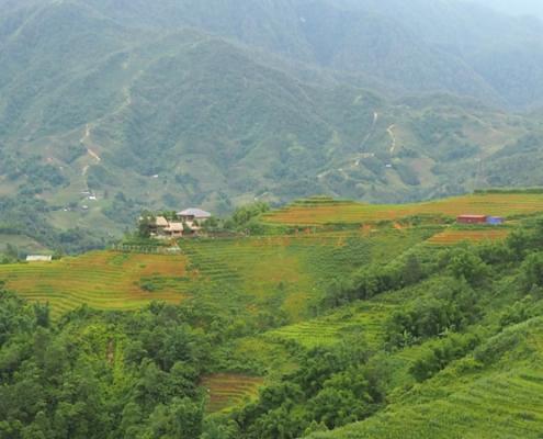 paysage de rizière en terrasse dans le nord Vietnam