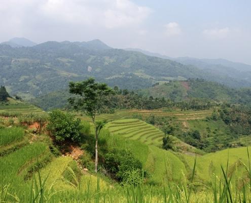 Panorama sur les rizières en terrasse de Hoang Su Phi