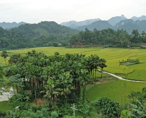 Panorama de la campagne de Tuyen Quang