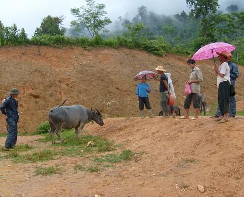 Marché au buffle dans le nord du Vietnam
