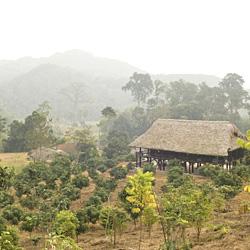 Ferme de Green Vietnam à Tuyen Quang