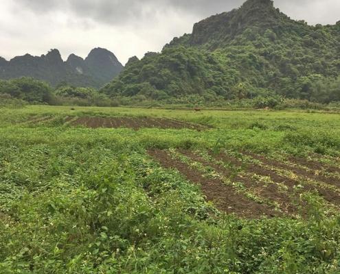 Avis voyage à Ninh Binh avec Carnets d'Asie