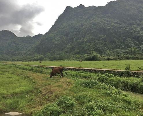Témoignage voyage à Ninh Binh avec Carnets d'Asie