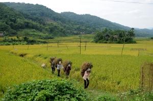 La campagne vietnamienne avec une agence locale